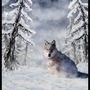 Wolf in its rightfull element by Cantwister