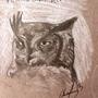 Owl by cmkinusn