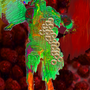Primordial Ejaculant III