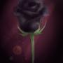 Rose. by MrsHusband