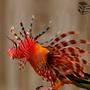 Fish and bird by JeffersonReis