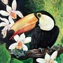 Bird of Paradise by Luciaea