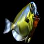 Fish by FelipeBudinich