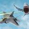 """""""Flying Sharks"""""""