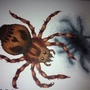 Fred The Spider