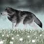 Grey Wolf by SkruffySteve