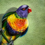 PaPagei - Parrot Drawing by OmarMadaeinArt