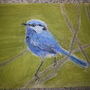Fairy-wren2 by Seriousle