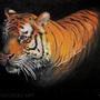 Tiger by YakovlevArt