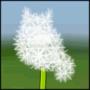 flower maus by Wiesi
