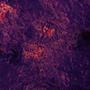 Stars - Dark Matter by Coft