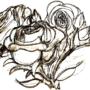 roses by freaknarf
