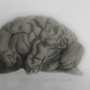 Realistic brain drawing by Andreeew