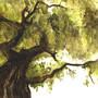 Tree by KattyC
