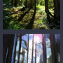 Thumbnail Practise - Forest