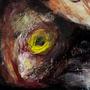 Goya fishy study by linda-mota