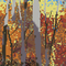 A Forest In The Fall