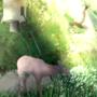 Deer Feeder by AngelXMIkey