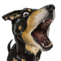 Speed the Heeler by 4cend