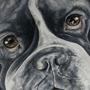 English Bulldog by MojoRising
