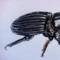 Funky Beetle
