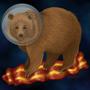 Space Bacon Bear