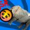 The Blushing Silver Rhinos
