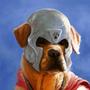 Doge by GGTFIM