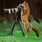 Fox and Camera