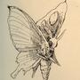 #049_Venomoth by Manguinha