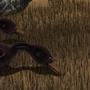 Dodo Pacifici by Ciullo-Corporation