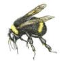 The Bumble Bee by MojoRising