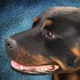 My Dog by BigMcDope
