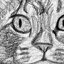 This Cat Sketch by Rockstar-Dreams