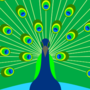 Peacock by Tooltip