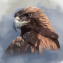 Eagle study process by SimonT