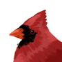 Birdy by Jogurt-NG