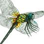 Dragon Fly Technical by MojoRising
