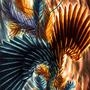 Phoenix Flight by o-eternal-o