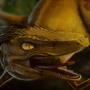 Velociraptor by MelesMeles