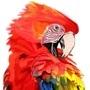 Macaw by Platanoz