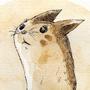 #162_Furret
