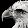 Eagle pt 2 by Platanoz