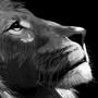 Lion pt 2 by Platanoz