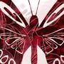 Butterflies by Nova