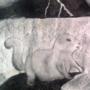 Squirrels by richalds