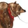 Circus bear by KattyC