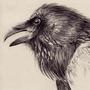 Pencil ravens by Aachen-erichaj