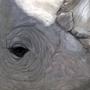 Rhino by Djoresh