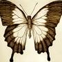 Butterfly by SMJ